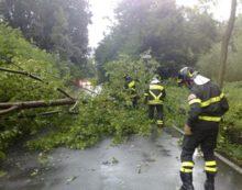 Raffiche di vento, due alberi precipitano a Nettuno. Chiusa via dei Cinque Archi