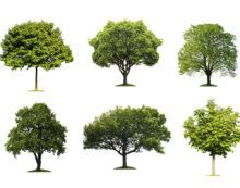Ad Aprilia verranno piantati 1.800 nuovi alberi