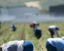 Controlli nelle aziende agricole tra Terracina e Fondi: al vaglio della Polizia la posizione di oltre 100 stranieri.