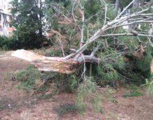 Maltempo, albero cade in via Le Pastine a Sermoneta