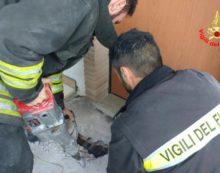 Cagnolino resta intrappolato in un'intercapedine, Spillo salvato dai vigili del fuoco
