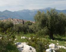 A Priverno sino al 6 maggio un corso per Assaggiatori di Olio Vergine ed Extravergine d'oliva.