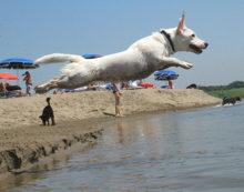 """Terracina, spiaggia vietata agli animali domestici. Legambiente: """"Il sindaco revochi il provvedimento"""""""