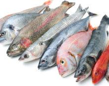 Progetto Pegaso, il mare di Torvaianica sarà ripopolato di pesci