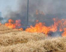Incendio a Nettuno, le fiamme divorano le sterpaglie