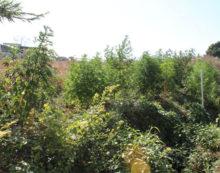 Operazione antidroga tra Aprilia, Lanuvio e Velletri: finto giardiniere in arresto