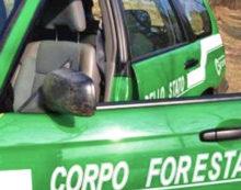 Controlli in due aziende agricole di Latina e Cisterna: scattano le sanzioni.