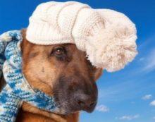 Proteggiamo i nostri animali dal freddo, 10 consigli utili