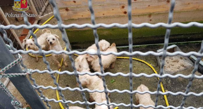 Scoperto ai Castelli Romani un allevamento clandestino di animali: sequestrati 67 esemplari, ora in attesa di affidamento.