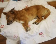 Lucky, l'associazione Amici del Cane di Latina pronta a costituirsi parte civile