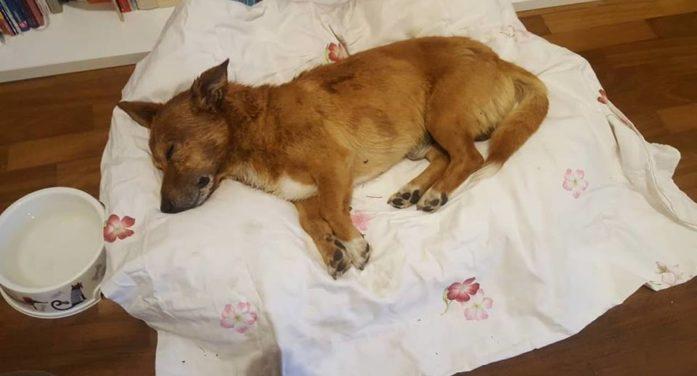 LATINA – Arrestato l'assassino del cane Lucky, un violento anche con la moglie ed i figli.