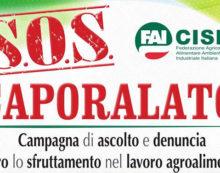 Sfruttamento nelle campagne: la Fai Cisl di Latina presenta il Numero Verde nazionale gratuito.