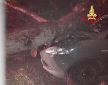 Tragedia sfiorata in via Acciarella, a Latina: un pino precipita contro un'auto in transito.