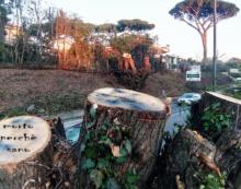 Abbattimento selvaggio degli alberi: sit-in di protesta questa domenica a Genzano.