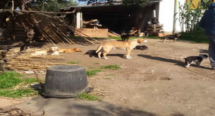 27 cani tenuti in pessime condizioni igieniche sanitarie: la Polizia denuncia a Lanuvio un pensionato di  82 anni.