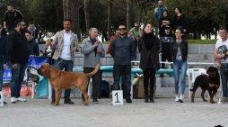"""Domenica 28 aprile """"Esposizione Amatoriale Canina"""" al Parco Friuli di Aprilia. Il PROGRAMMA."""