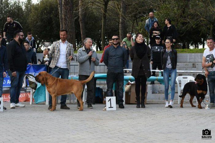 Domenica 28 Aprile Esposizione Amatoriale Canina Al Parco Friuli