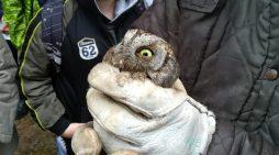 Animali selvatici curati e liberati alla tenuta Calissoni-Bulgari di Aprilia, un esempio