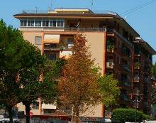 """Abete secco al centro della piazza, ad Aprilia: la lettera-denuncia dedicata """"ad un albero nato morto""""."""