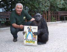 """Domenica 14 luglio """"Scimpanzè Day"""" allo Zoo delle Star di Aprilia: si celebra """"Tanga"""", star del film """"Bingo Bongo"""" con Celentano."""