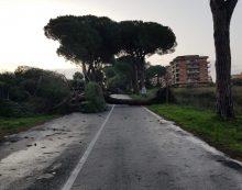 Chiuso un tratto dell'Appia Nord, saranno abbattuti degli alberi