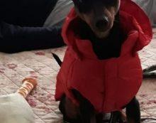 Abbandona il cane in strada ad Anzio, condannato a pagare 4 mila euro