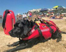 Cani bagnino sulle spiagge di Sperlonga