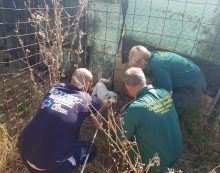 Cani incustoditi in una proprietà privata ad Aprilia, in condizioni di degrado: intervento delle Guardie Zoofile e della Asl.