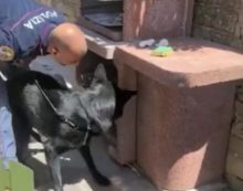 Hashish e cocaina nascosti in un barbecue: il cane antidroga Wumm fa arrestare un  43enne dei Castelli Romani.