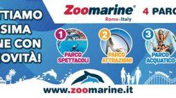 Chiusura anticipata dello Zoomarine a causa del nuovo Dpcm: validità prolungata dei biglietti per chi ha vinto con Studio 93.