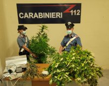 Nascondeva  una serra di marijuana in un box. 34enne arrestato dai Carabinieri a Torvaianica.