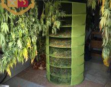 La Questura di Roma sequestra oltre 13 kg di marijuana. Un arresto ed una denuncia.